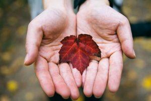 Сухой лист в руках