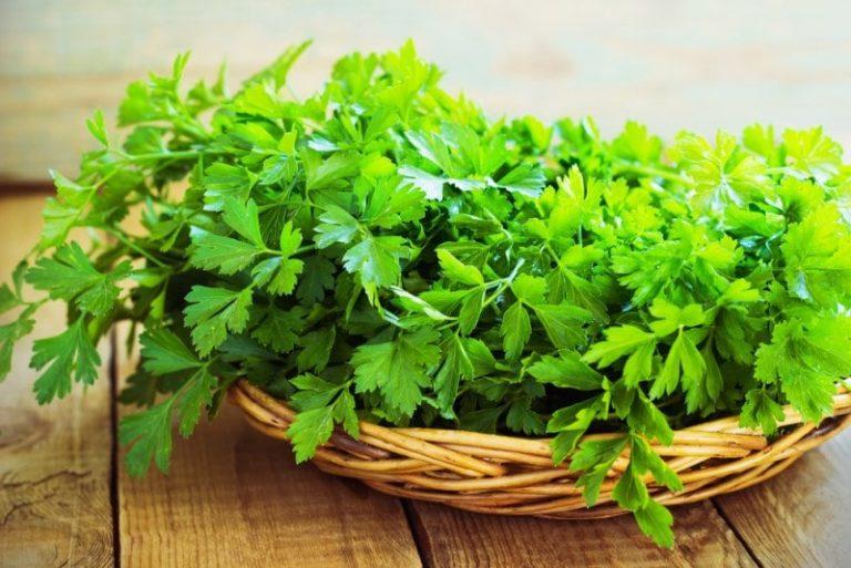 Наличие витамина а, в зелени петрушки делает кожу гладкой, тонизирует, защищает, предотвращает сухость, шелушение.