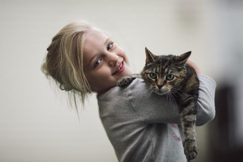 Обнимать кота