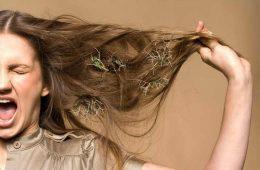 Сухие волосы: что делать, как увлажнить